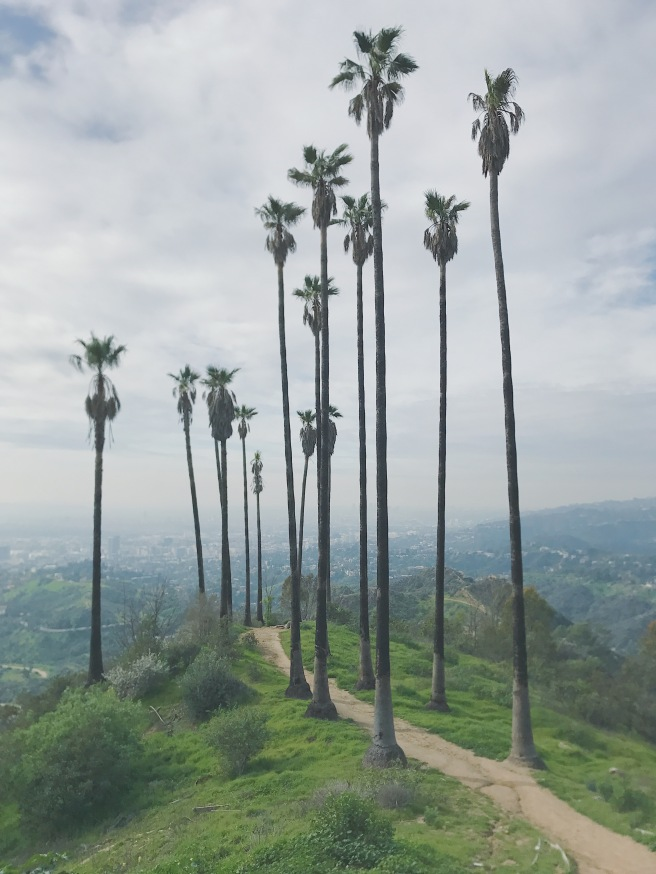 Runyon Canyon Trail