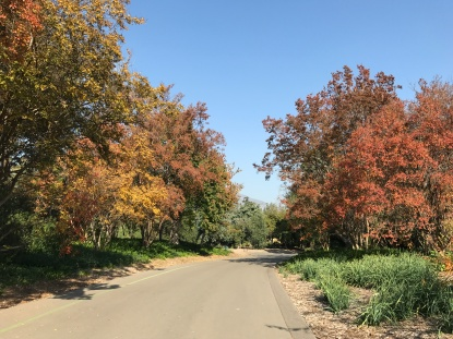 Los Angeles County Arboretum and Botanical Garden